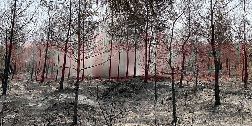 Yangın sonrası yürek burkan manzaralar