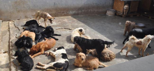 Barınak hayvanları için el birliği