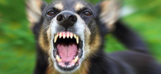 Saldırgan köpekler 2 yaşındaki çocuğu ÖLDÜRDÜ