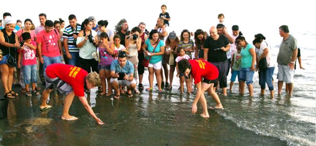 Yavru kaplumbağalar denize bırakıldı