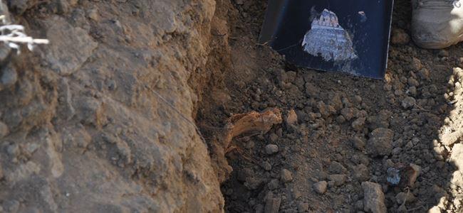 Mezardan 'kafatası hırsızlığı' YARGIDA