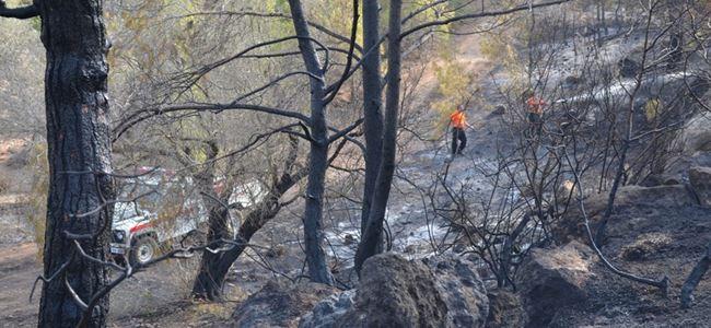 33 dönüm orman kül oldu
