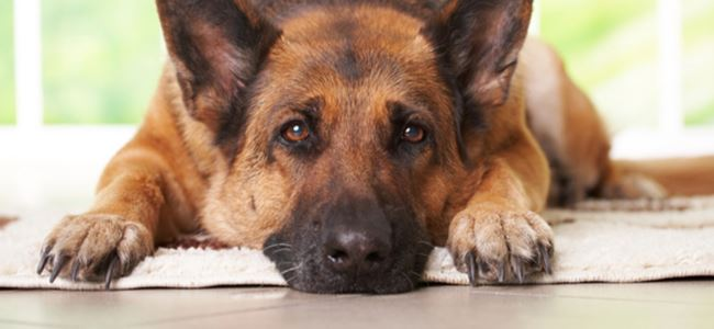 Köpek sahiplerine uyarı