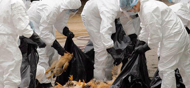 Veterinerler kuş gribi konusunda uyardı