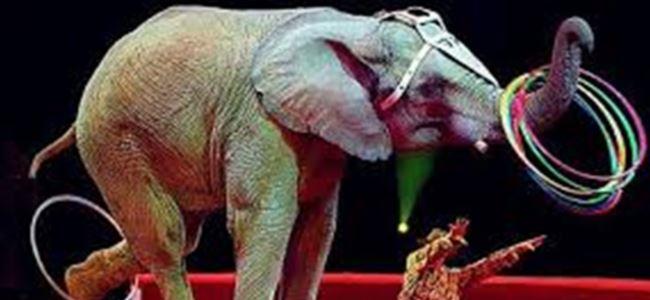 Meksikada hayvan sirki yasaklanıyor