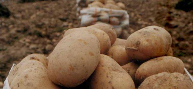 Patates alanları için itiraz süresi uzatıldı