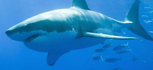 Köpek balığı saldırısı can aldı