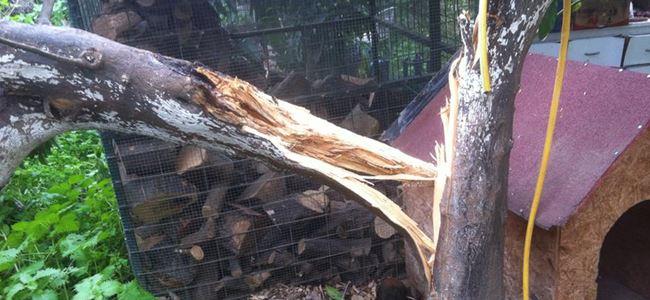 Fırtına ağaçlara zarar verdi