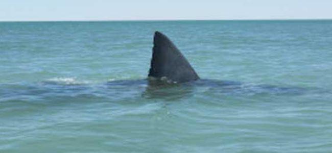 Köpek balığı saldırısında bir kişi ölü
