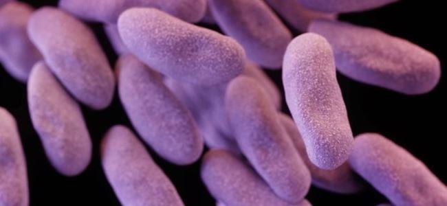 Antibiyotiklere dirençli bakteri can aldı