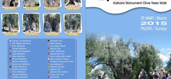 Anıt Zeytin Ağaçları Gezisi