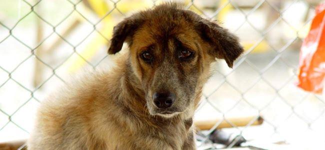 Hayvan Refahı Yasası'ndan altı kişiye ceza