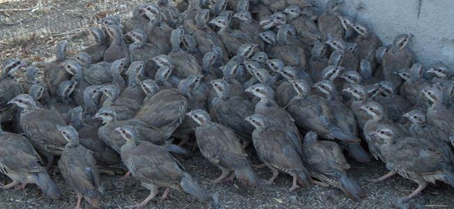 Gönyeli Avcılıktan kulüplere açık çağrı