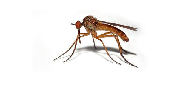 Sivrisineklerle biyolojik mücadele konusunda eğitim