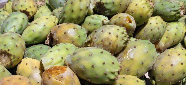 Kıbrıs meyveleri koruma altına alınıyor