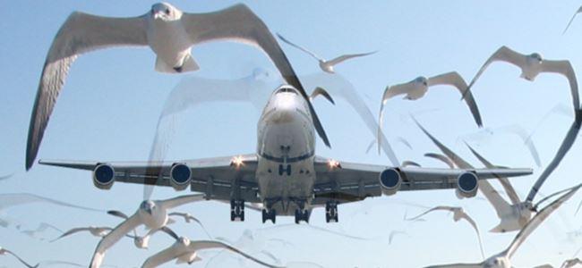 Kuş sürüsüne çarpan uçak düştü