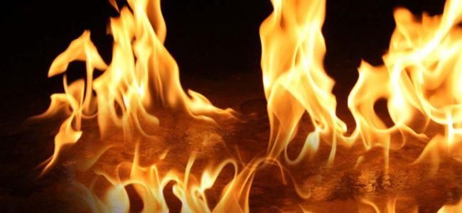 3 yangın; 5 bin ağaç yandı, 280 hayvan telef oldu