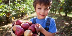 Sağlıklı beslenelim derken zehirleniyor muyuz?