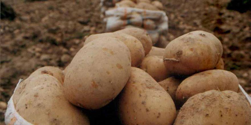 Araçta kaçak 625 kilo patates tohumu
