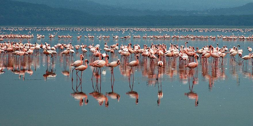 Pembe flamingolar, Tuz Gölü'nde