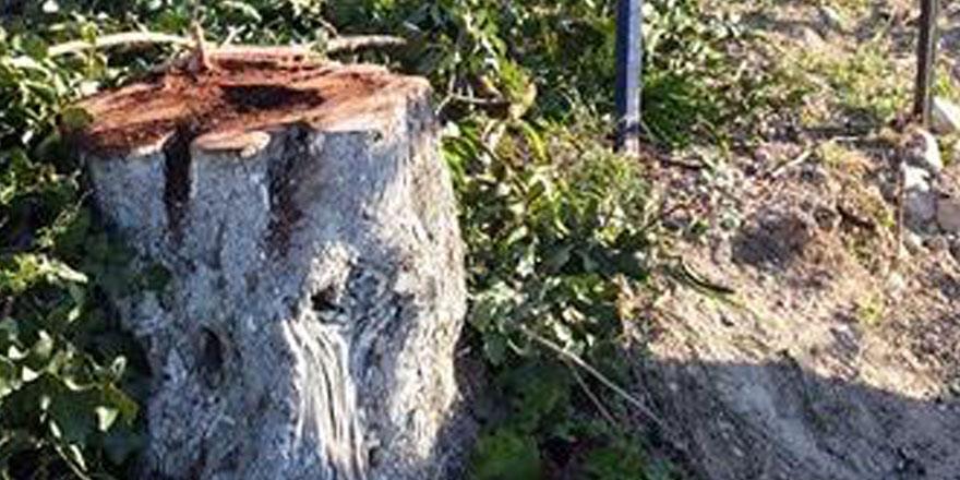 """""""Ağaçları kesip, odun satıyorlar"""" iddiası!"""