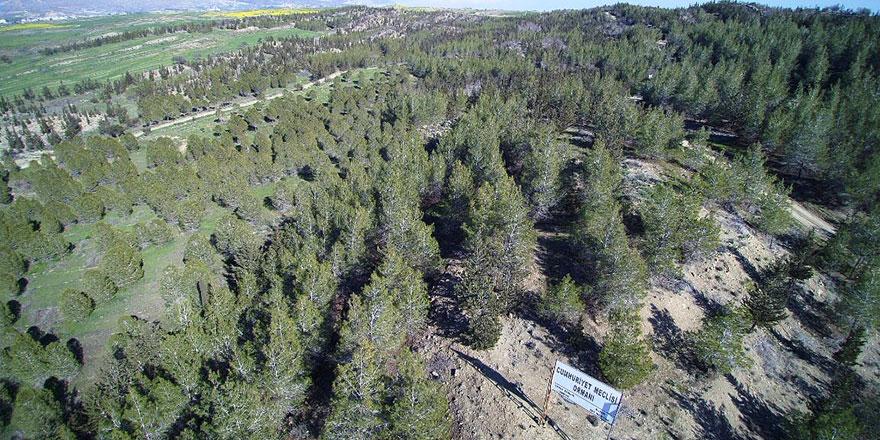 Yangın tehlikesine karşı tüm orman yolları 3 gün trafiğe kapatıldı