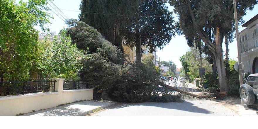 Lefkoşa'nın bazı noktalarında ağaçlar devrildi