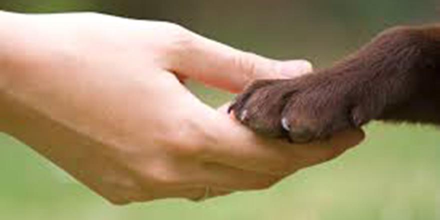 Adil bir yaşam ve Hayvan Refah Yasası