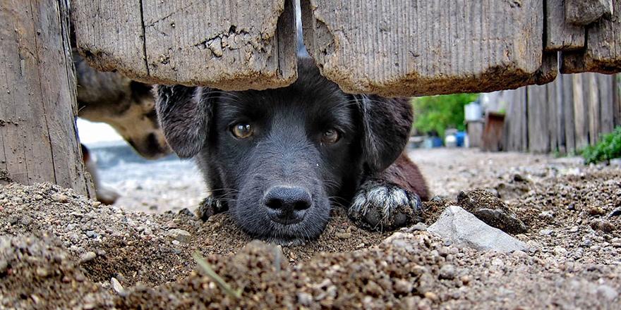 Köpek sahiplerine önemli uyarı