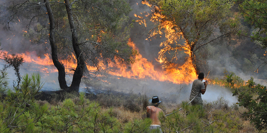 Kalkanlı'daki yangında yanan ağaçlar odun olarak satılacak