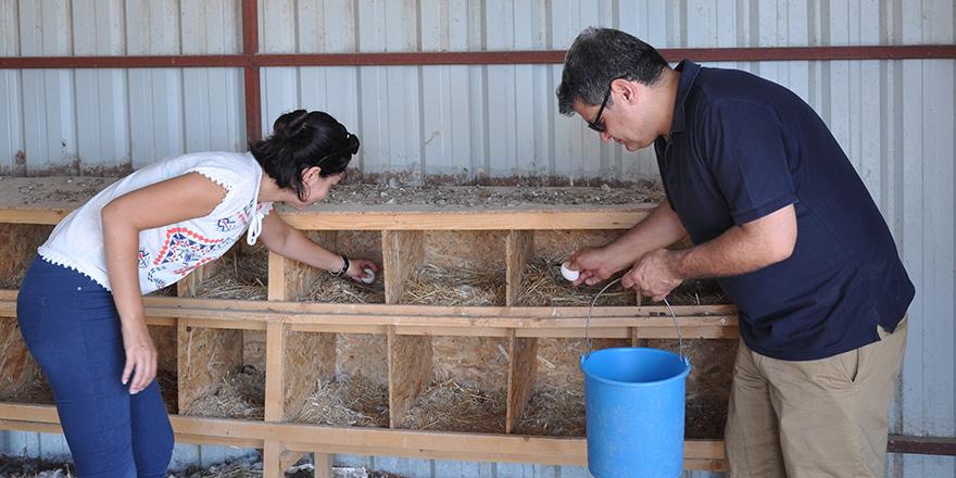 'Köyce Organik Tarım Çiftliği'