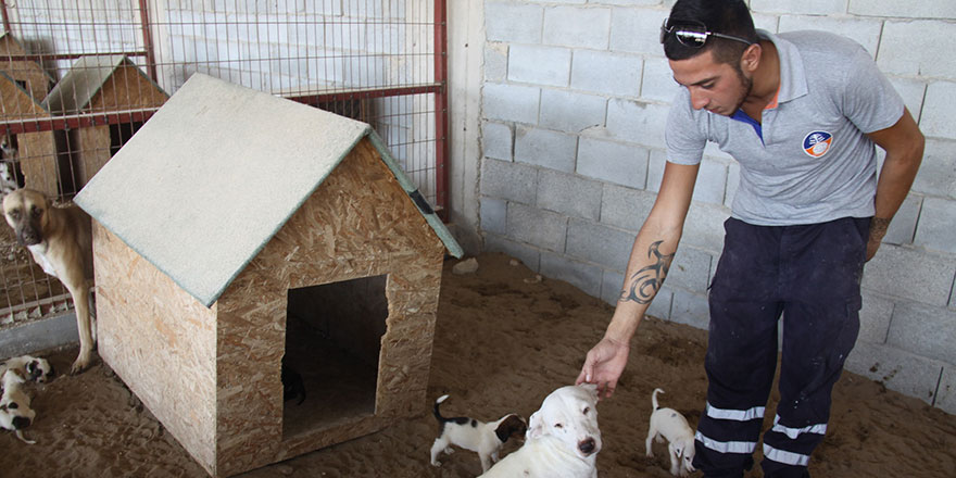 İskele Belediyesi'nden hayvan severlere çağrı