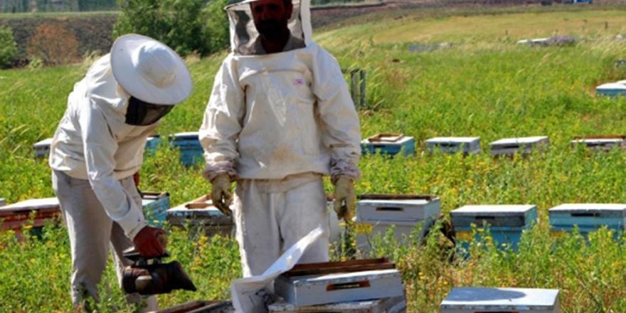 Arı üreticilerinden başvuru bekleniyor