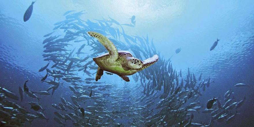 Şehir Işıkları Altında Deniz Kaplumbağası Olmak