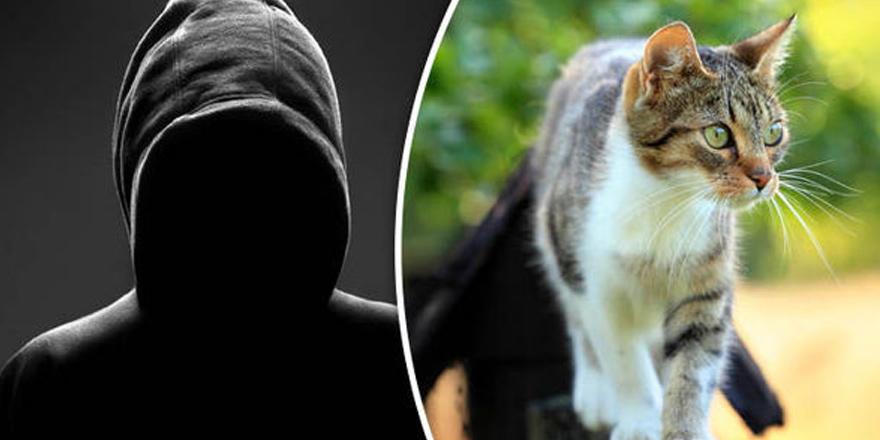 Polis, seri kedi katilinin peşinde