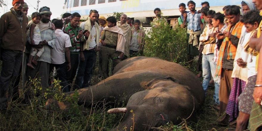 Tren fil sürüsüne çarptı!