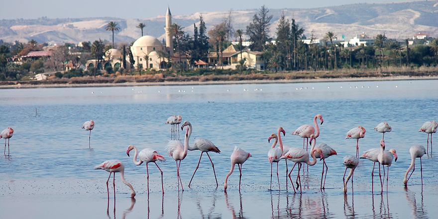 Flamingoların sayısı azaldı