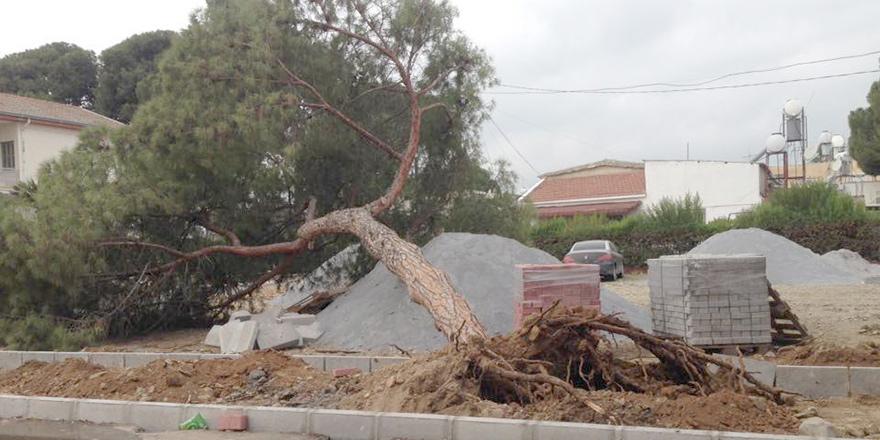 Güzelyurt'ta çevre düzenlemesi çam ağacını devirdi!