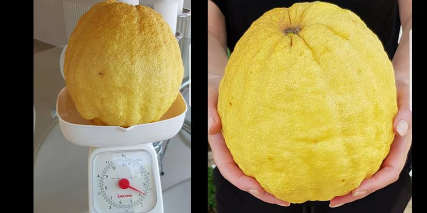 Dev limon sosyal medyada gündem oldu
