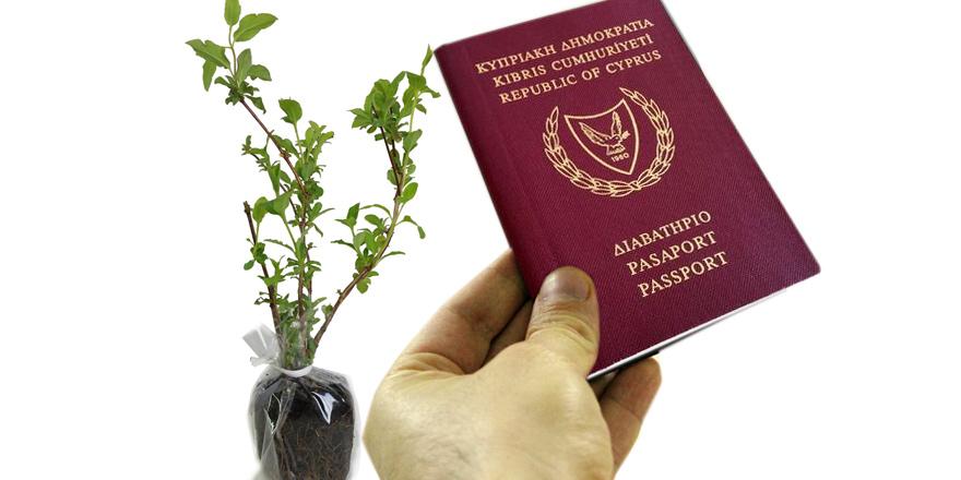 """Ağaç ve bitkilere """"pasaport"""" uygulaması"""