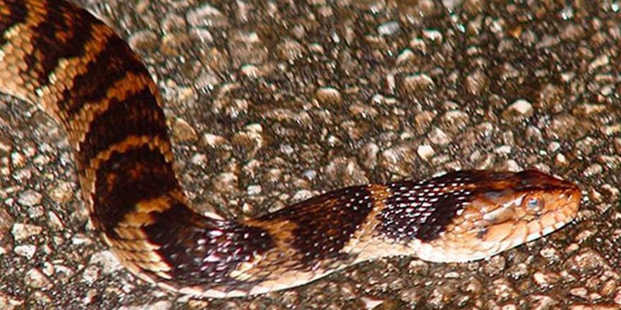 Her yıl 5 milyon 400 bin kişiyi yılan ısırıyor