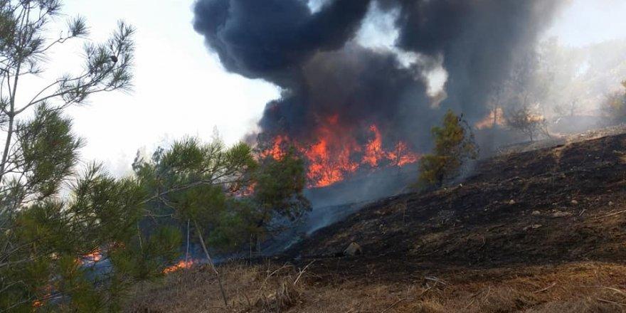 Mudanya'daki yangın kontrole alınamıyor: Başkan 'rant şüphesi'ne işaret etti