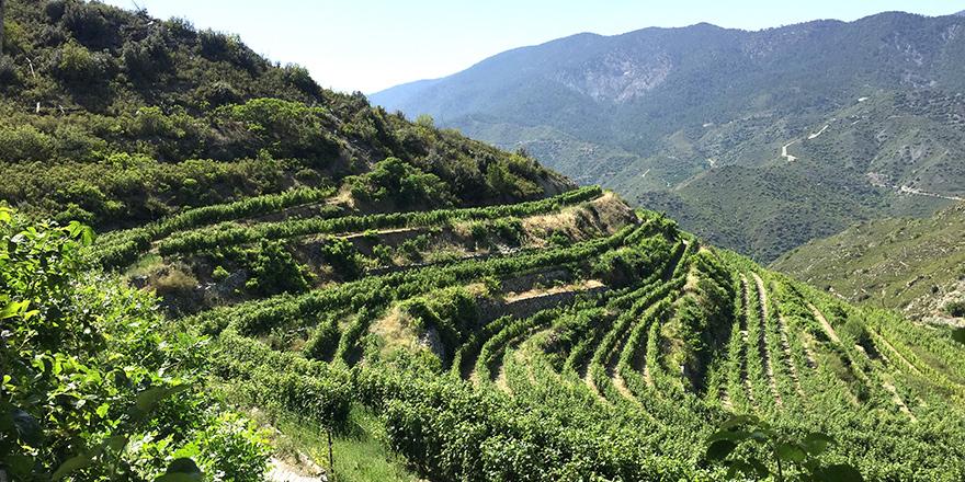 Trodos'ta bir şarap diyarı