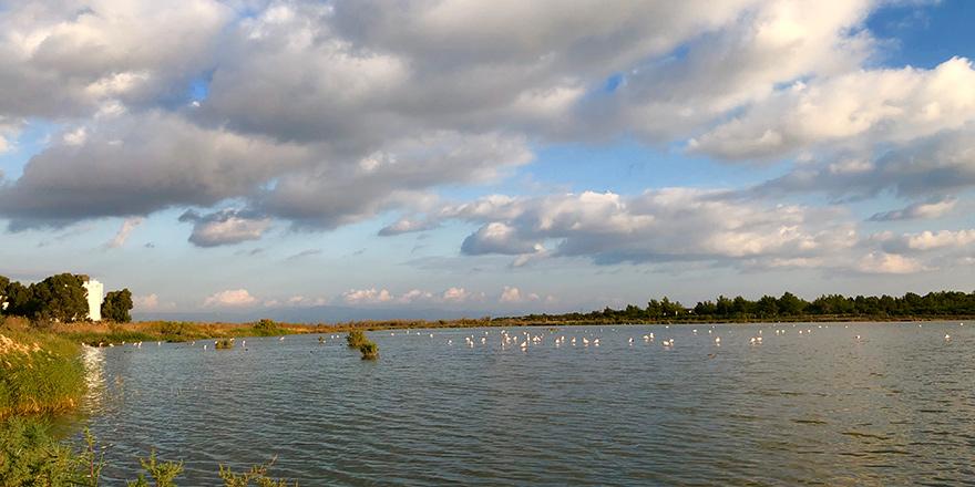 Neopolis sulak alanında yüzlerce kuş saptandı