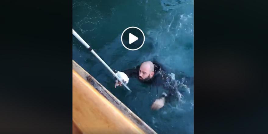 Denize düşen yavru kedi kurtarıldı