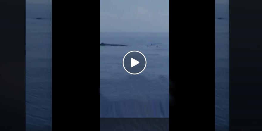 Mağusa açıklarında köpek balığı