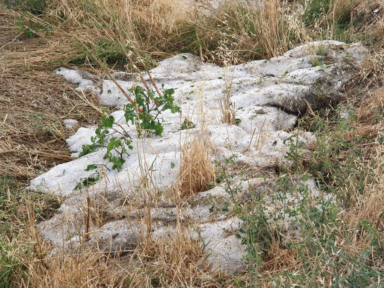 Tarım: Karpuz ve kavun zarar gördü