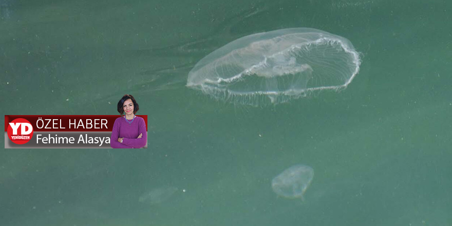 Denizanasına dikkat!