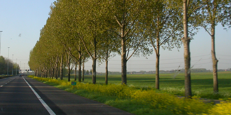 10 milyon ağaç projesi