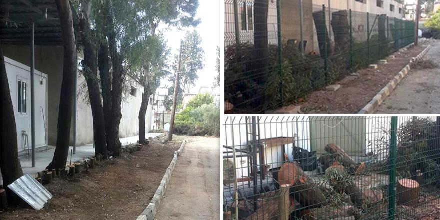 Ağaçlar katledildi!